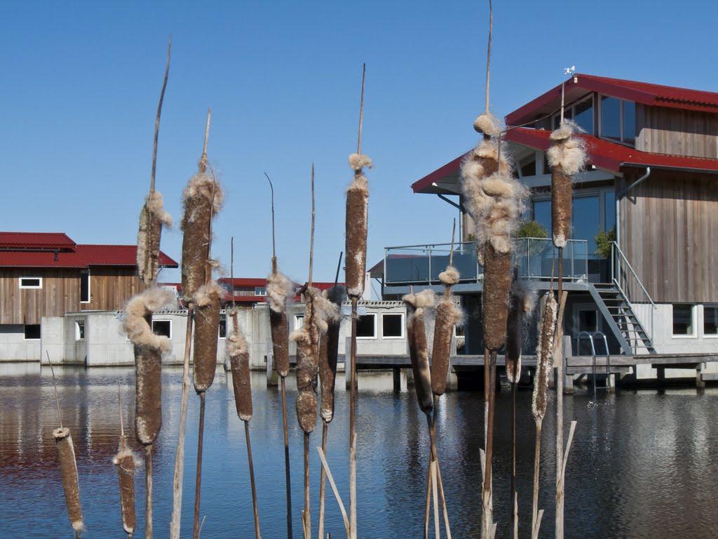http://www.waterpaviljoens.nl